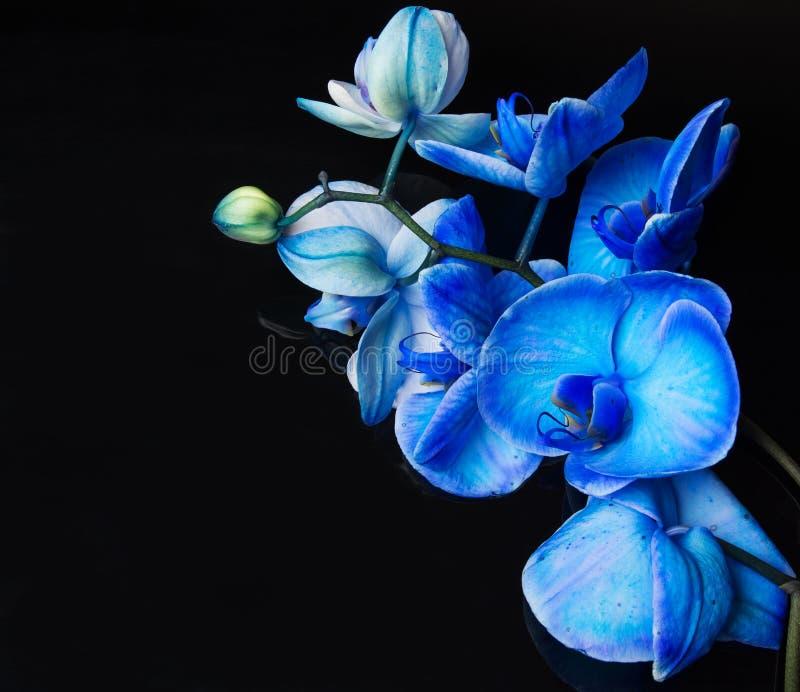 好的蓝色的兰花 免版税库存图片