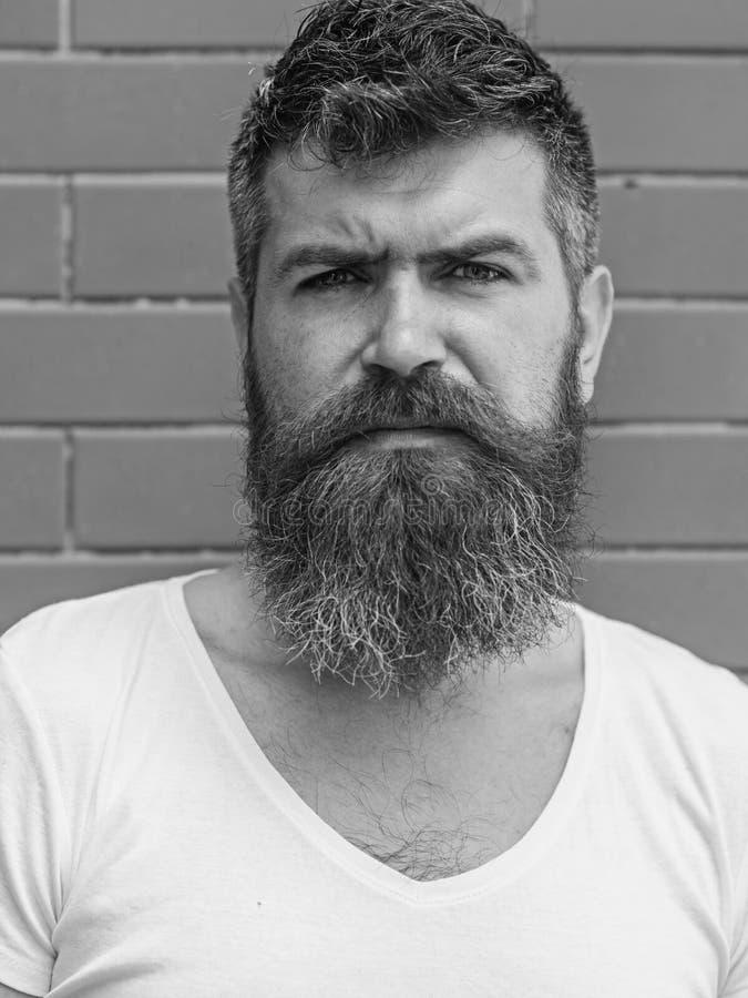 如何留伟大的胡子 胡子修饰从未是很容易 胡子关心把戏将保留您面毛看 库存图片