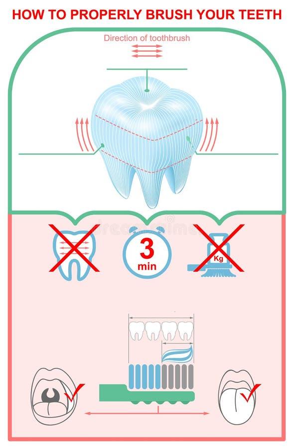 如何适当地刷您的牙 教育牙科infographics 向量例证