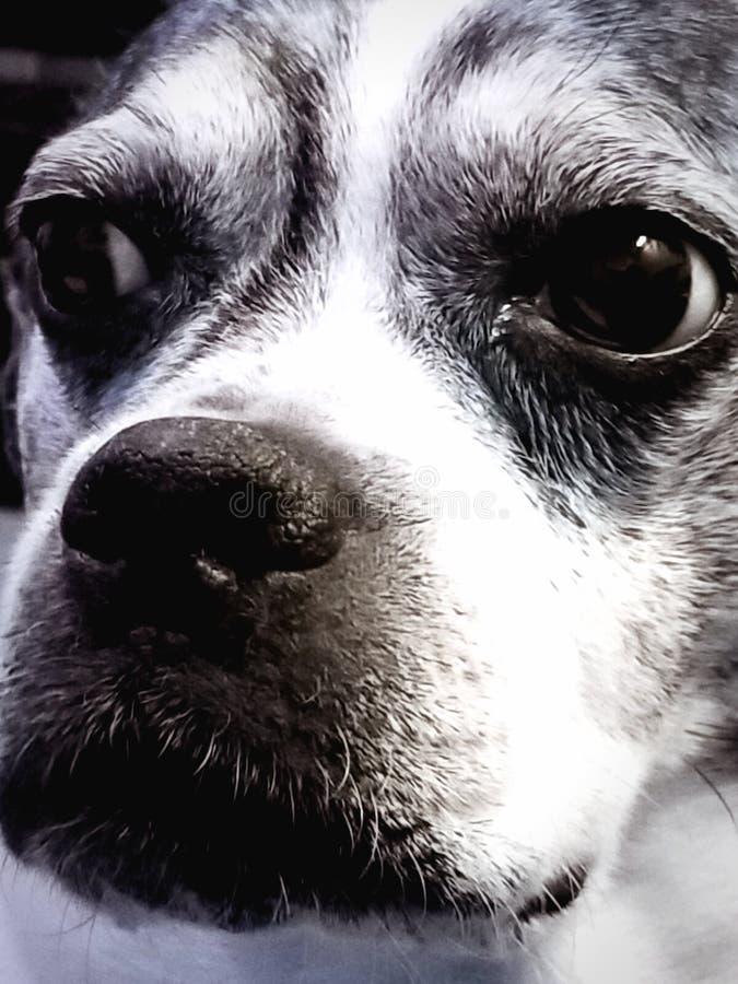 如果狗可能看颜色 库存图片