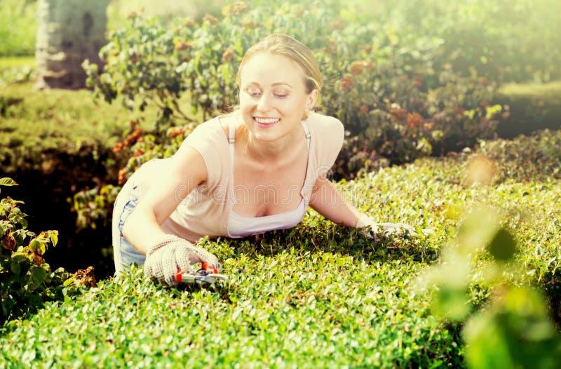 妇女与绿色灌木一起使用使用园艺工具 免版税库存照片