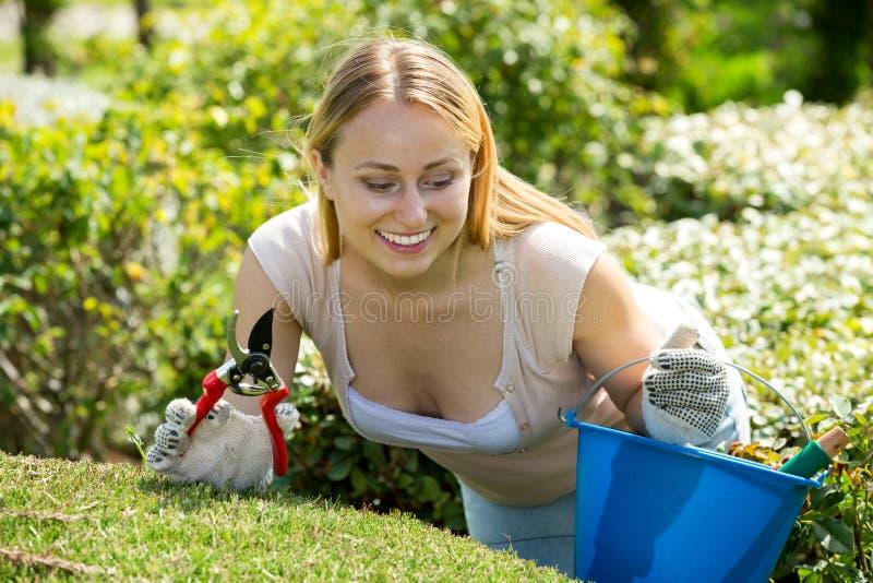妇女与绿色灌木一起使用使用园艺工具 免版税库存图片