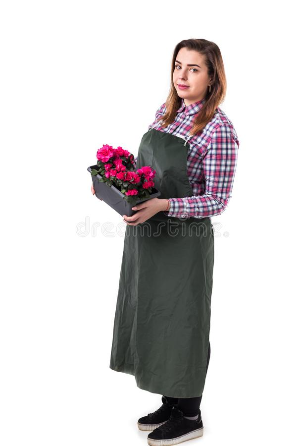 妇女专业花匠或卖花人拿着花在罐的围裙的隔绝在白色背景 免版税库存图片