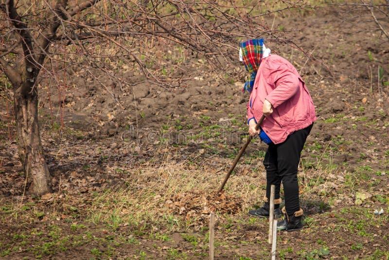 妇女从土壤去除叶子在庭院里 免版税库存图片