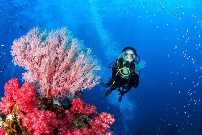 妇女佩戴水肺的潜水和珊瑚的美丽充满活力的颜色在Similan,北部安达曼海 免版税图库摄影