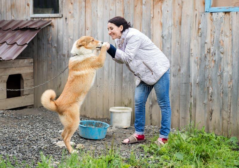 妇女使用与在一个木棚子的背景的一条狗 库存图片