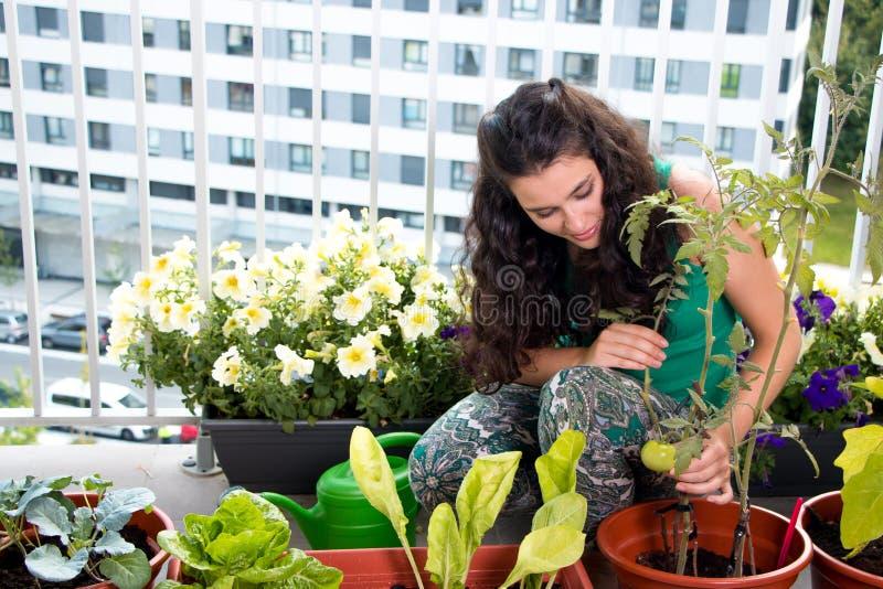 妇女关心她的小菜园在阳台上 库存图片