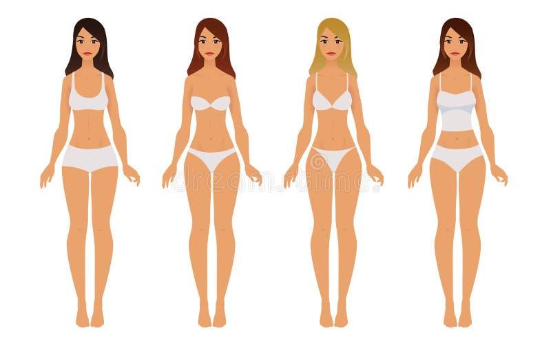 妇女内衣的类型 向量例证