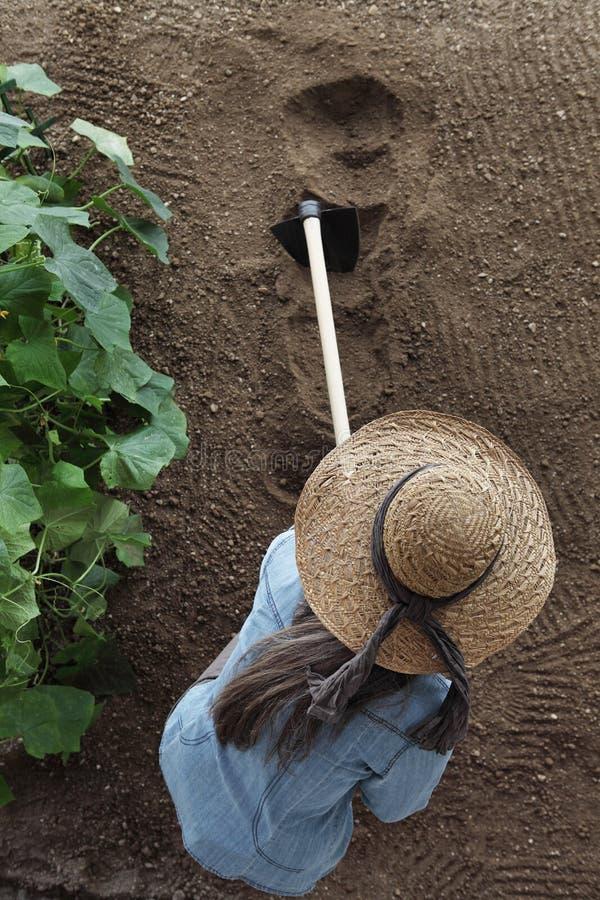 妇女农夫与锄一起使用在菜园里,锄土壤在黄瓜植物附近 免版税图库摄影
