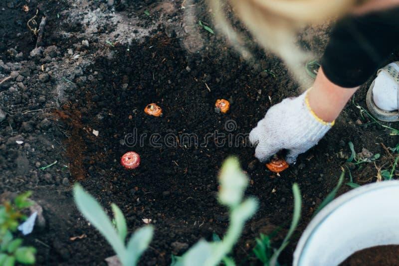 妇女农夫照料种植园的植物 种田 增加肥料 库存图片