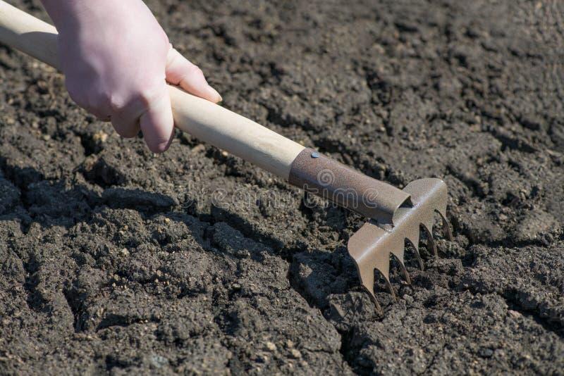妇女农夫的手的片段,拿着一把犁耙并且松开破裂的地球 免版税图库摄影