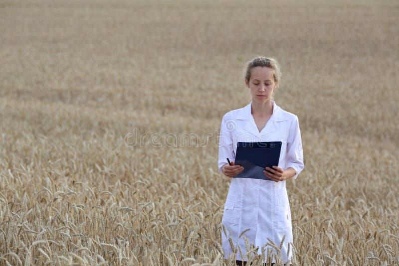 妇女农艺师或一位科学家或者一名学生有文件的在她的手上在麦田 免版税库存照片