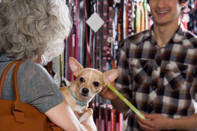 妇女和奇瓦瓦狗在宠物店 免版税库存图片