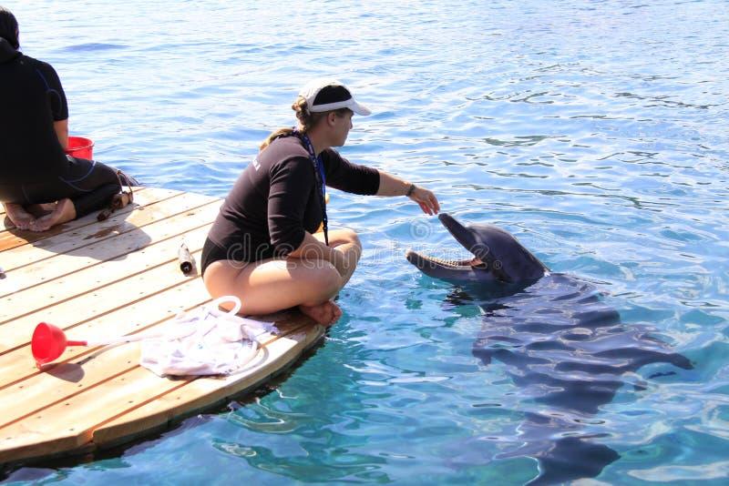 妇女和海豚在水中 库存照片