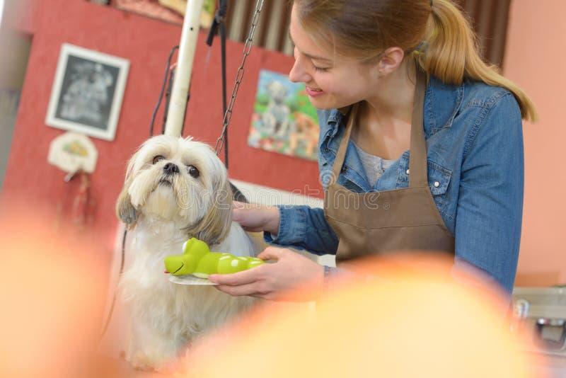 妇女和狗在宠物修饰沙龙 库存图片