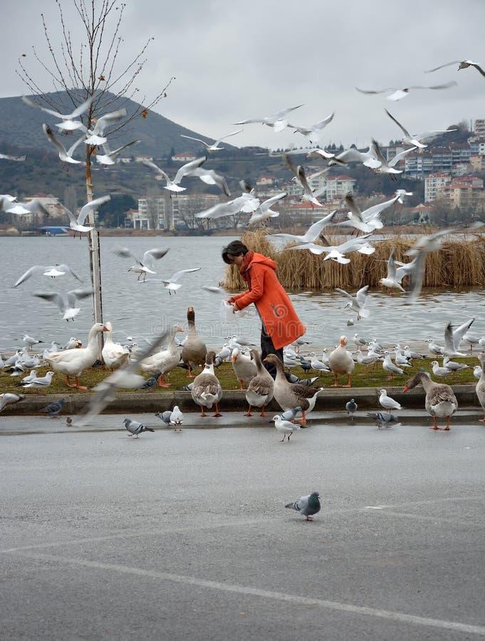 妇女哺养的鸟 库存照片