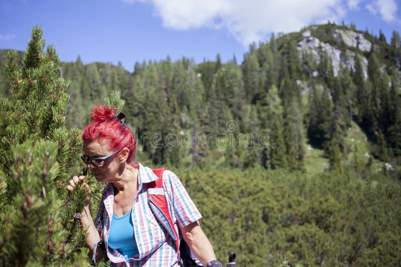 妇女嗅在山的杉树 图库摄影