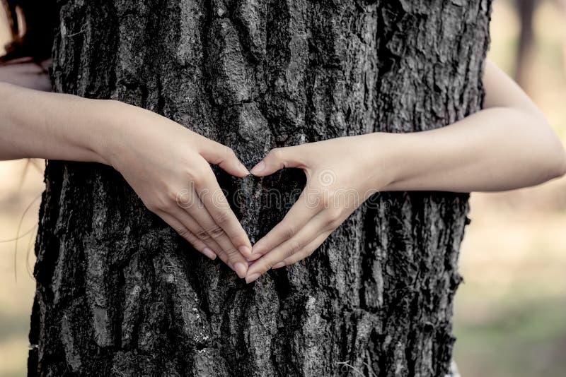 妇女在一棵大树附近递做心脏形状 免版税库存照片
