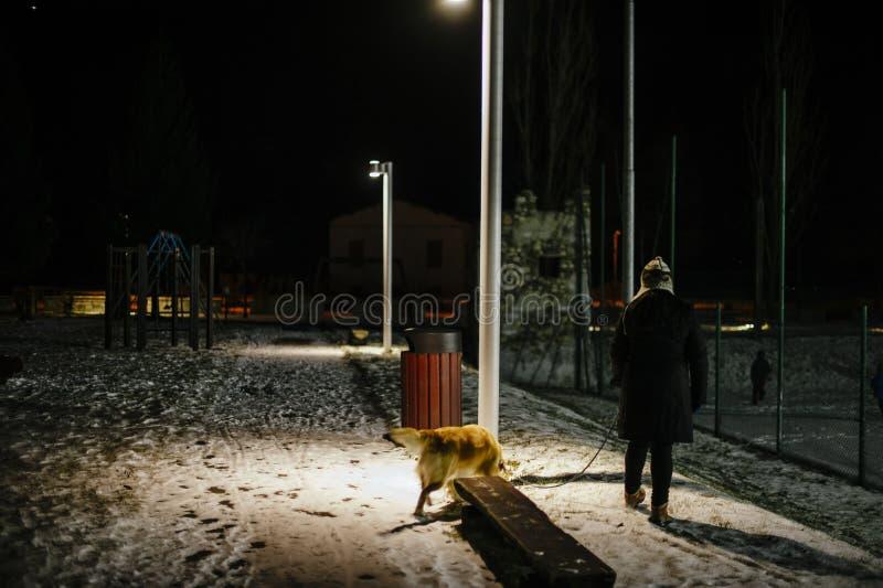妇女在与狗的晚上走在光点燃的皮带  免版税库存图片