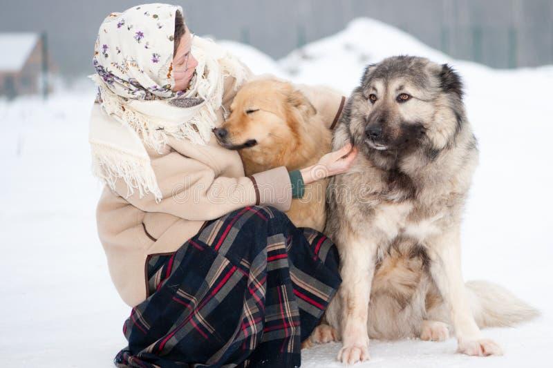 妇女在公园训练白种人牧羊人和围场狗在多雪的地面 免版税库存图片