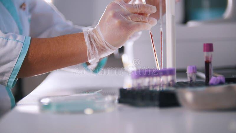 妇女在医学实验室分析血液 库存图片