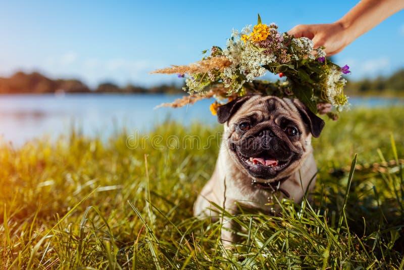 妇女在哈巴狗狗头上把花花圈放由河 愉快的小狗使变冷的户外 免版税库存照片