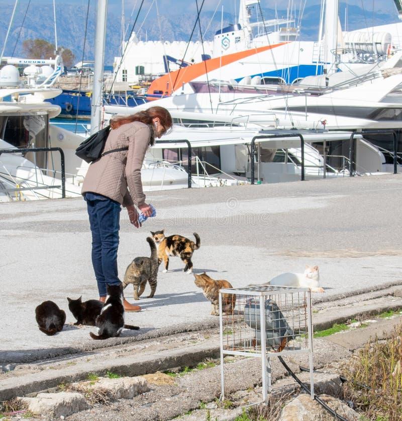 妇女在小游艇船坞Mandraki喂养无家可归的猫在罗得岛 免版税库存照片