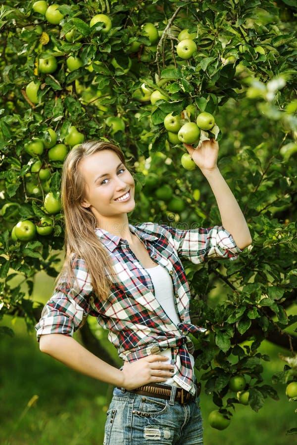 妇女在收获季节期间的一个苹果树庭院里 年轻s 库存图片
