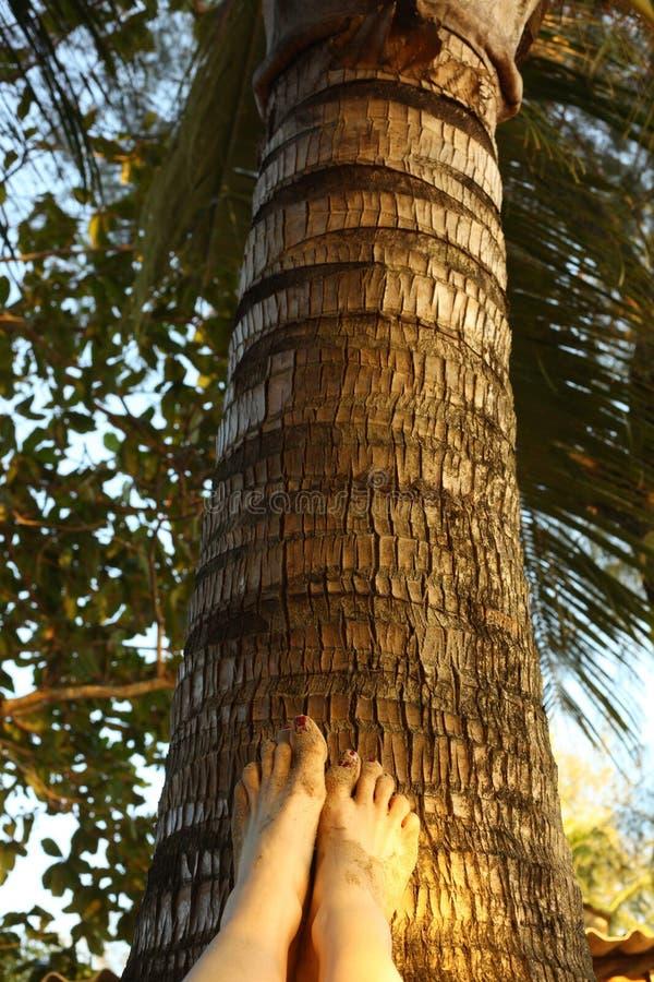 妇女在棕榈树的pedicured脚 库存图片