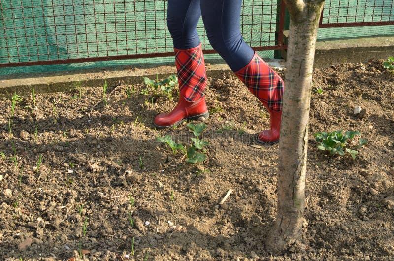 妇女在红色胶靴的` s腿在庭院里 库存照片