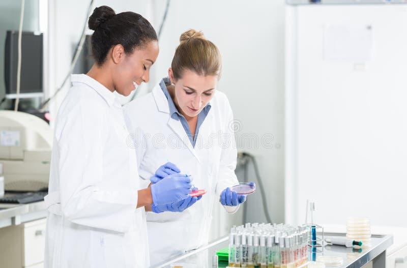 妇女在谈论对毒菌样品的研究实验室测试 库存照片
