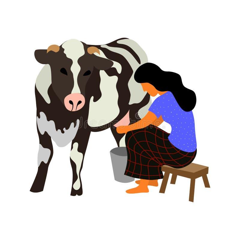 妇女坐椅子并且挤奶在白色背景的一头黑白母牛 r 皇族释放例证