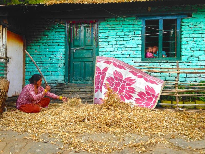 妇女处理在喜马拉雅山山安纳布尔纳峰艰苦跋涉的豆 库存图片