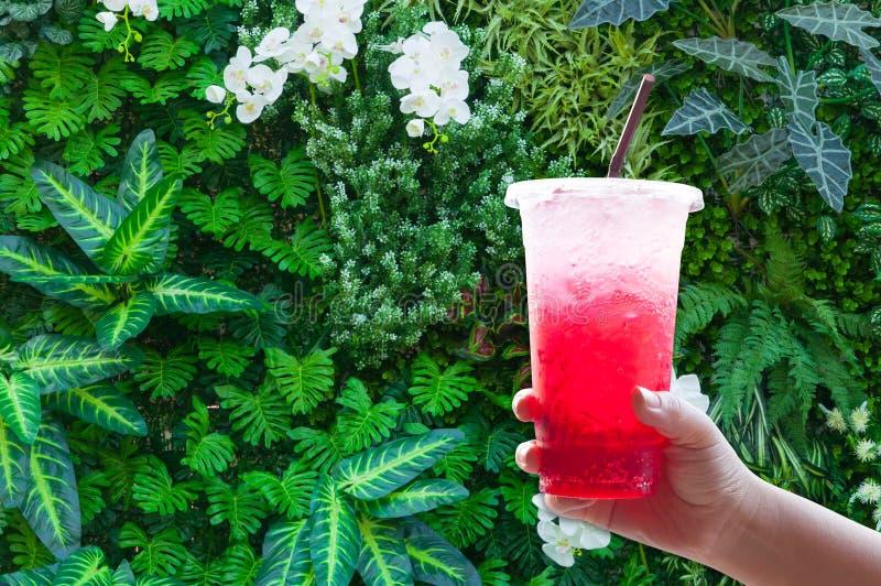 妇女处理拿着在绿色自然的塑料杯子冰水红色意大利苏打 库存照片