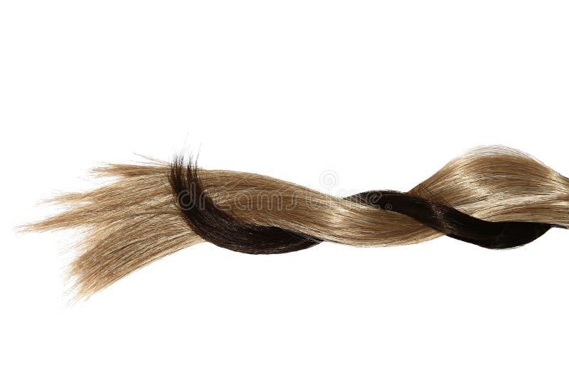 妇女头发称呼 免版税库存照片