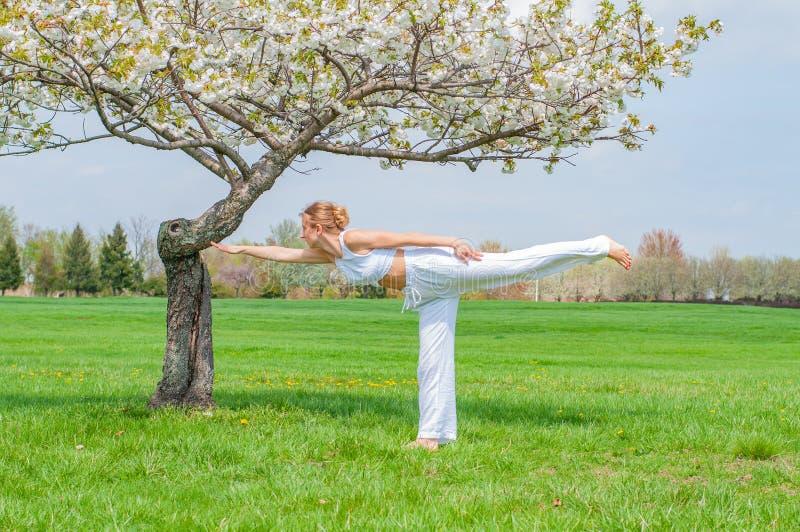 妇女实践瑜伽,做Virabhadrasana III锻炼,站立在战士三姿势在树附近 免版税图库摄影