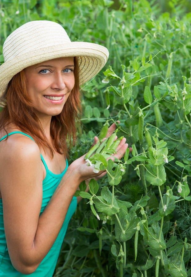 妇女展示荚新鲜的豌豆 库存图片