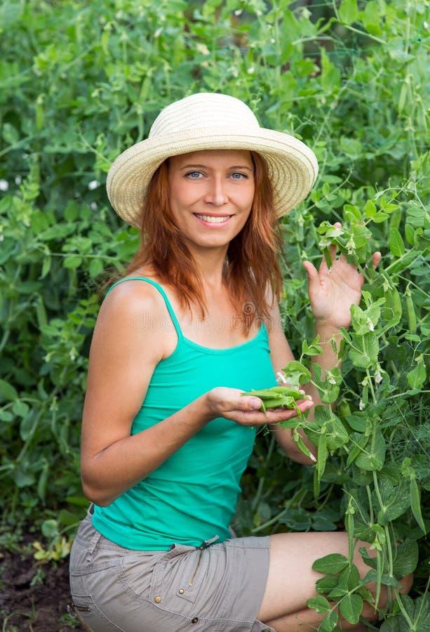 妇女展示荚新鲜的豌豆 库存照片