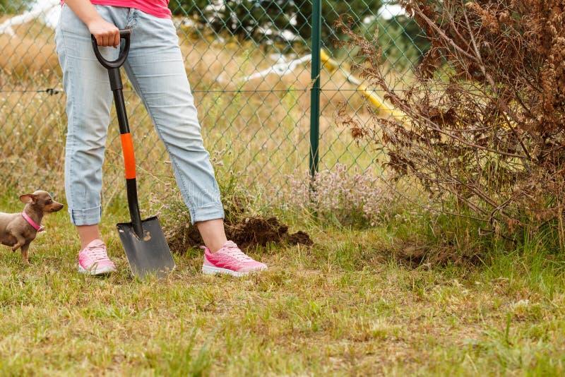 妇女开掘的孔在庭院 免版税库存图片