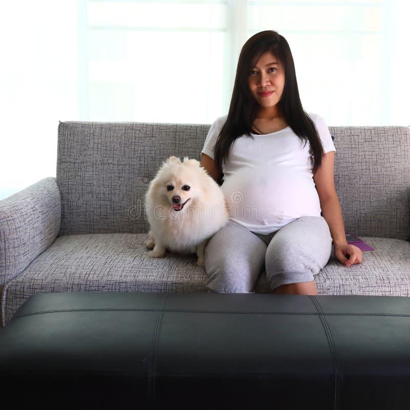 妇女怀孕的9个月和pomeranian狗 免版税库存图片