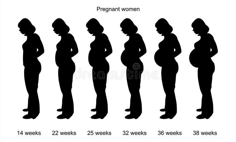 妇女怀孕 皇族释放例证