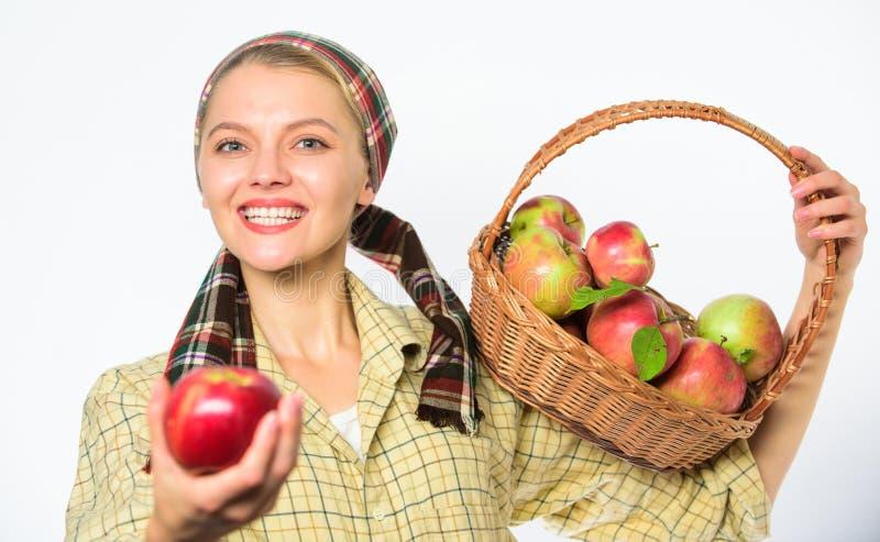 妇女恳切的村民运载篮子用自然果子 夫人花匠感到骄傲为她的收获妇女花匠土气样式 免版税图库摄影