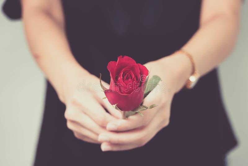 妇女手举行红色玫瑰华伦泰` s在爱的天概念全部 免版税库存照片