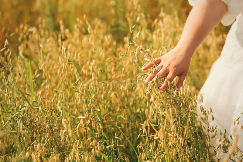 妇女手感人的高夏天草 库存图片