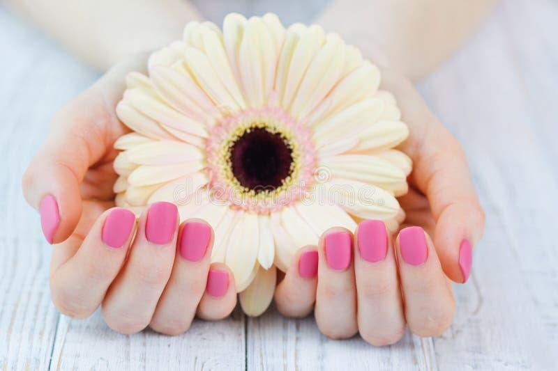 妇女托起了有美好的桃红色有席子的修指甲的手 免版税库存照片