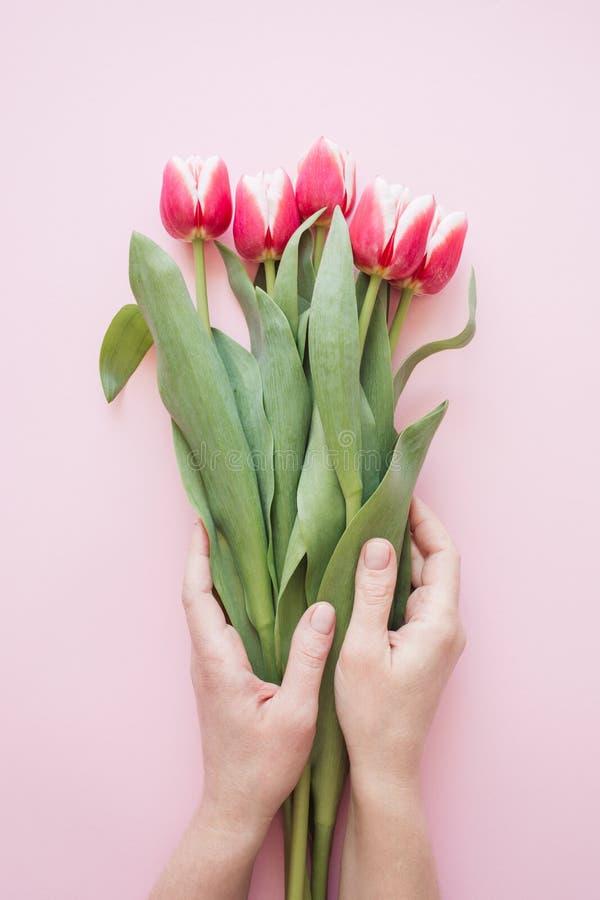 妇女拿着郁金香的` s手 免版税图库摄影