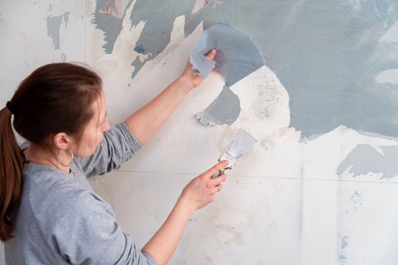 妇女撕下墙纸,去除墙纸从墙壁与小铲,更新墙壁室修理的过程 ? 免版税库存图片