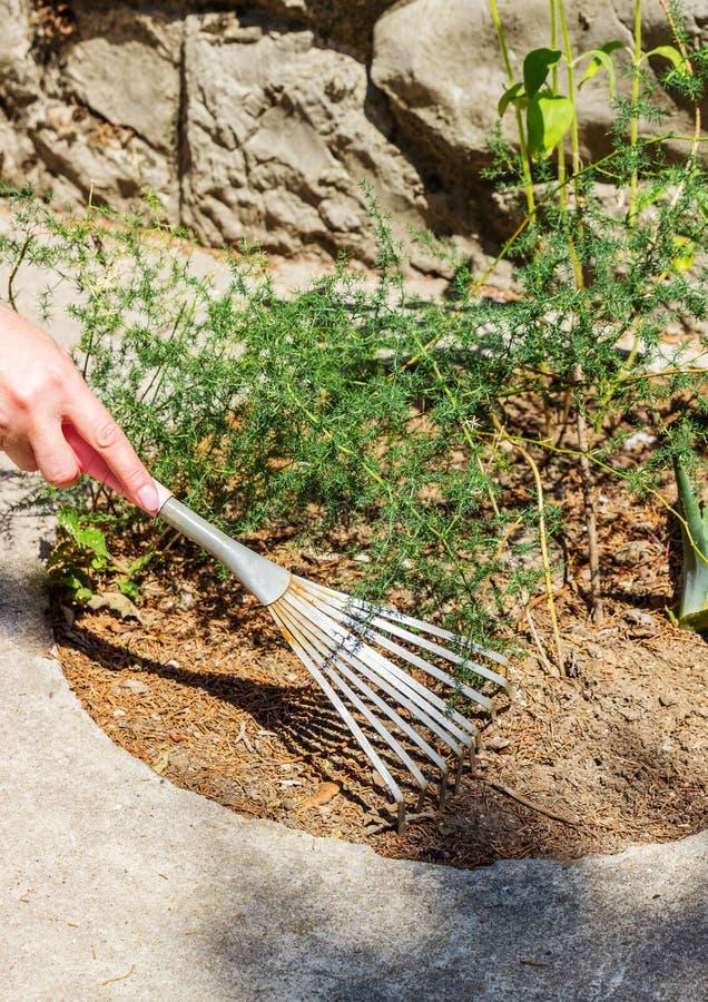 妇女是有犁耙的从事园艺的手 库存照片