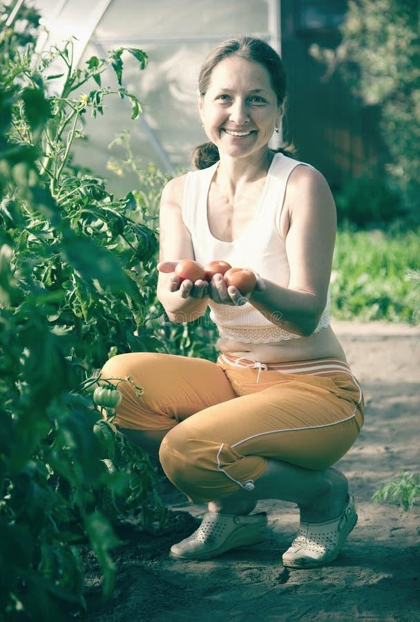 妇女是采摘蕃茄我 免版税库存照片