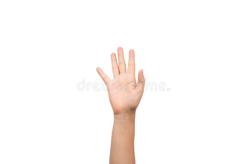 妇女显示在白色背景的培养手五个手指 库存图片